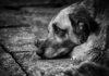 Шкуру сняли с собаки в Подольске