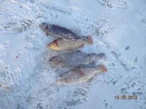 рыбалка Чехов