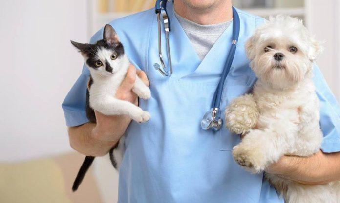 Ветеринарные клиники Чехова