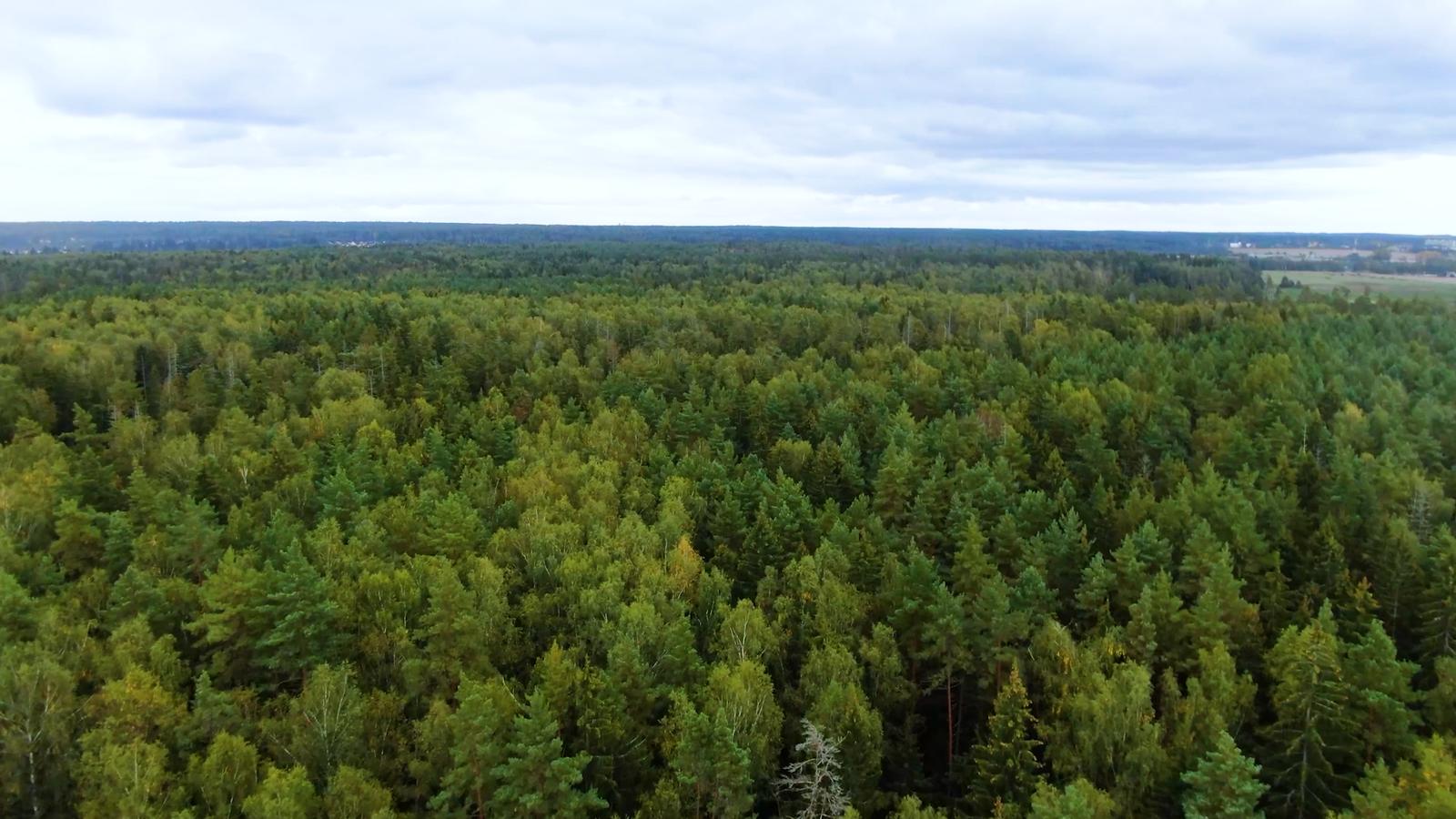 Десять тысяч саженцев посадили в Одинцовском округе в Международный день охраны озонового слоя | Изображение 4