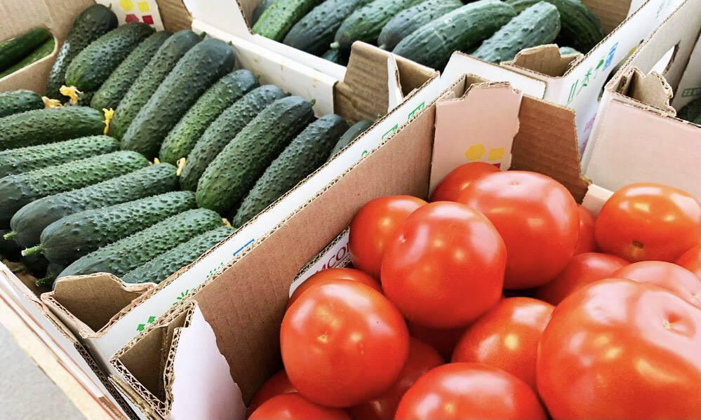 Подмосковье вошло в топ-3 регионов по сбору овощей в зимних теплицах | Изображение 1