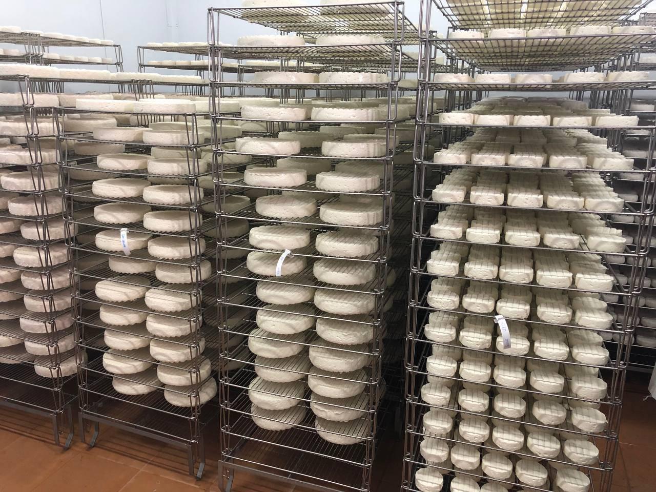 Порядка тысячи тонн продукции в год будут производить на новой сыроварне в Чеховском округе | Изображение 2