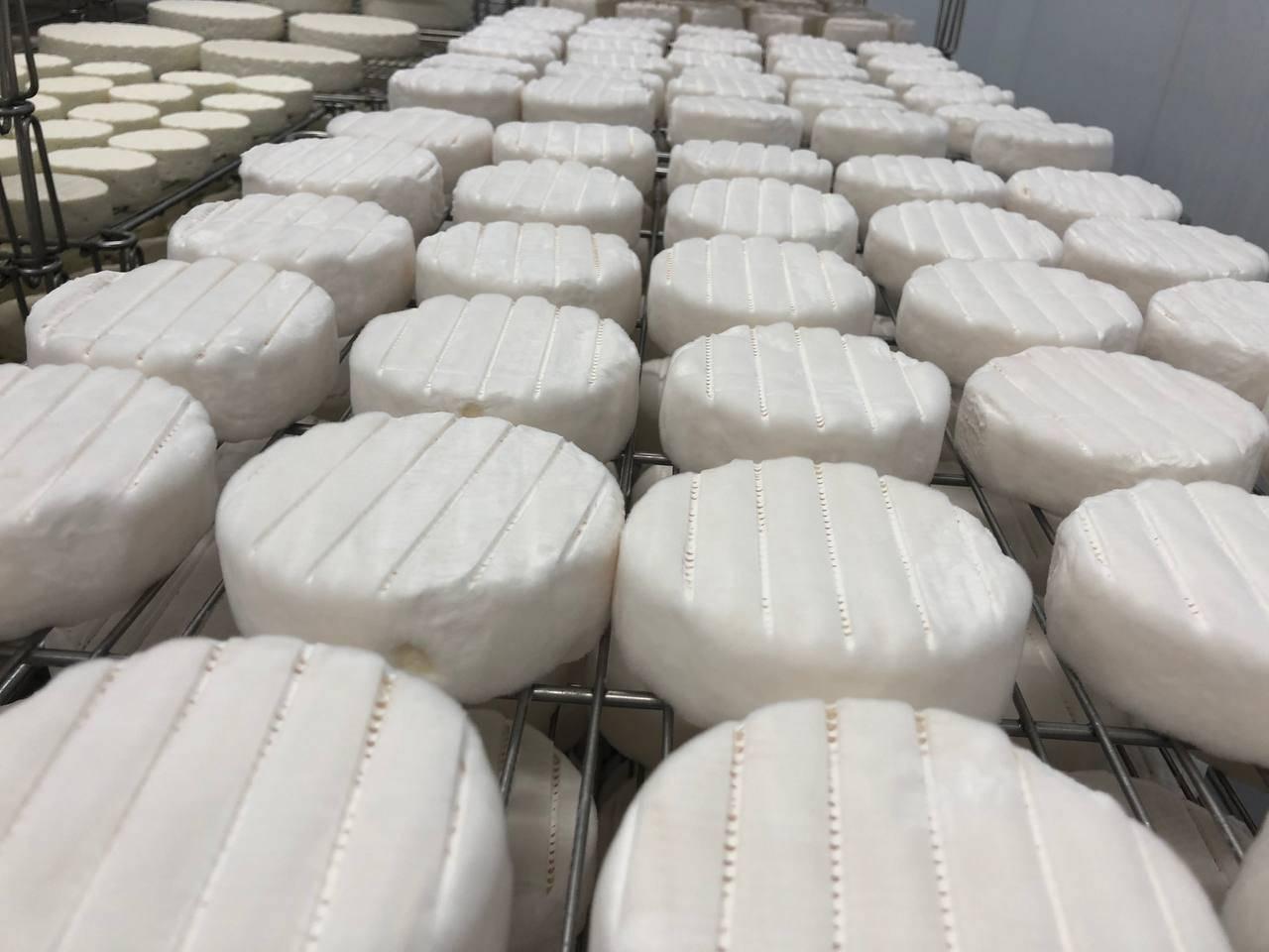 Порядка тысячи тонн продукции в год будут производить на новой сыроварне в Чеховском округе | Изображение 3