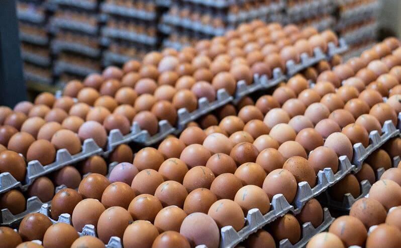 Производство яиц в Подмосковье выросло на 5,2% | Изображение 1