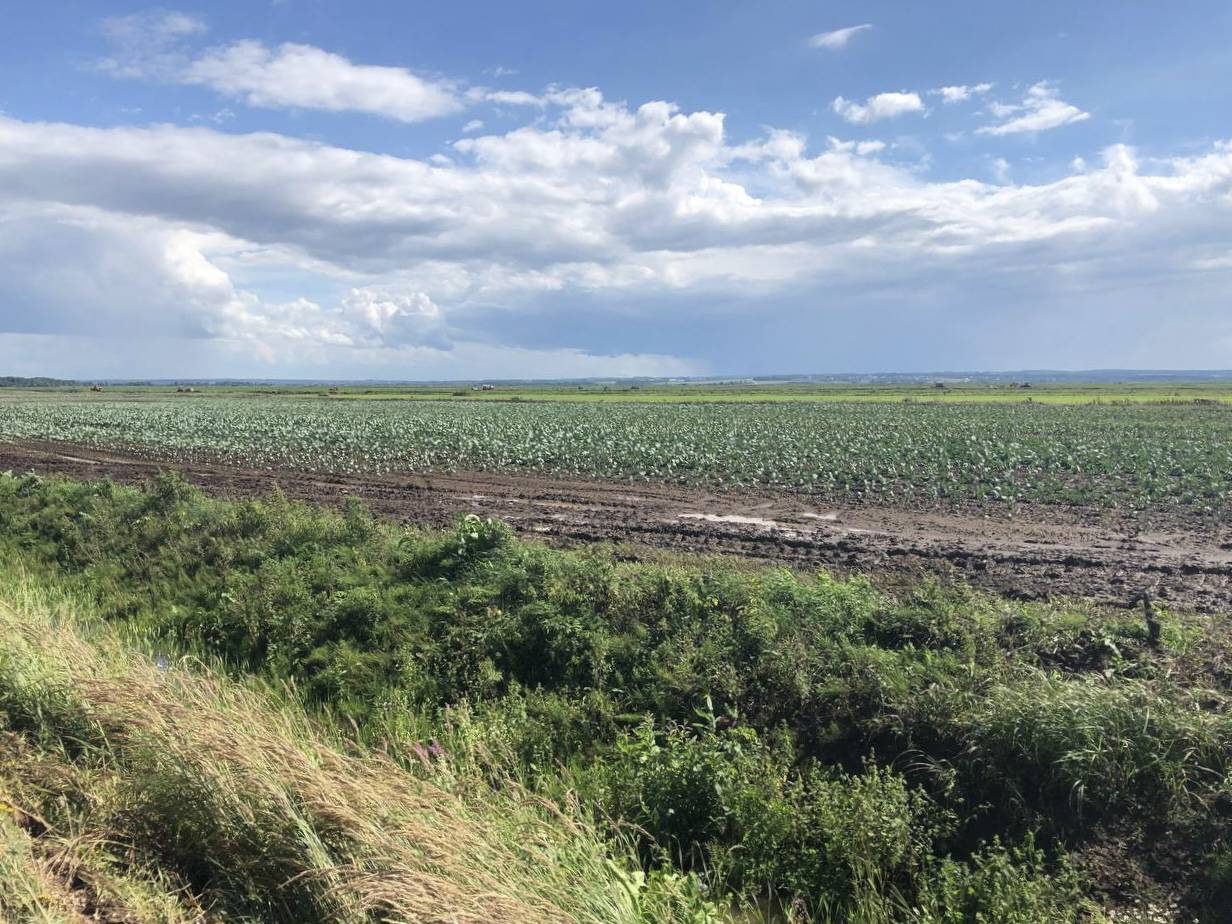 Систему орошения земель в Талдоме реконструируют до конца года | Изображение 2