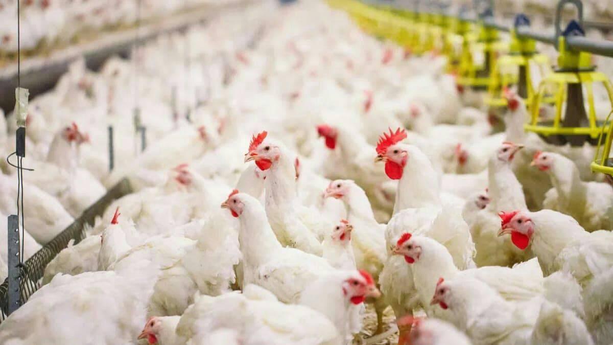 Ветеринары не выявили птичьего гриппа в Подмосковье | Изображение 2
